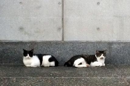 千駄ヶ谷 東京体育館の猫