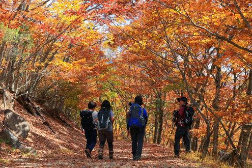 瑞牆山の林道