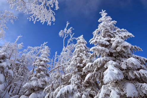 蓼科山の樹氷