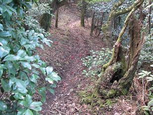 スマン峠からの下山道210411