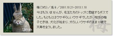 prof_ume2013