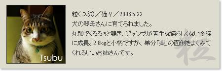 prof_tsubu2013