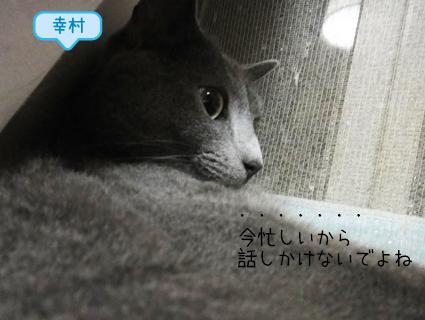 20110829_2.JPG