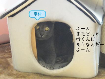 20110829_1.JPG