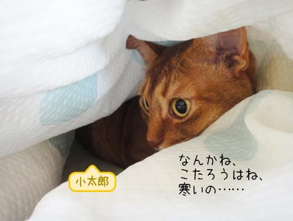 20110926_4.JPG