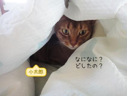 20110926_3.JPG