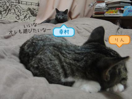 20111111_2.JPG