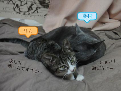 20111111_4.JPG