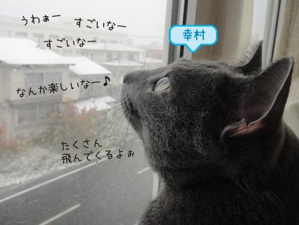 20111115_4.jpg