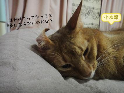 20111130_2.JPG