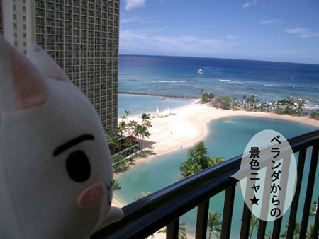 トロとハワイの海
