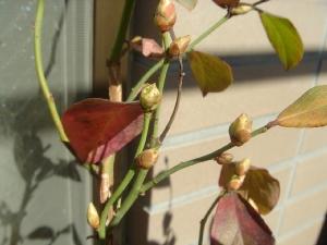 ブルーベリーの春