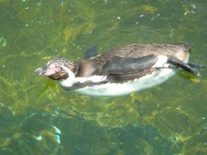 人気のペンギン