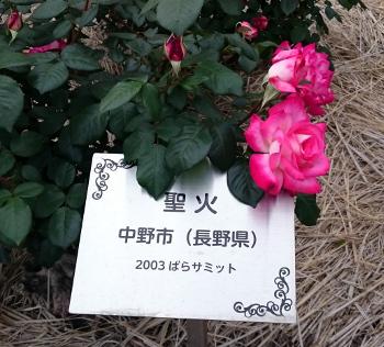 DSC_2045.JPG