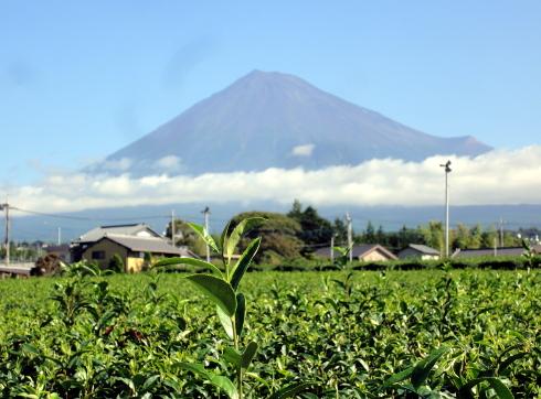 富士山DSC00804.JPG