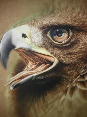 鳥類イラスト リアル