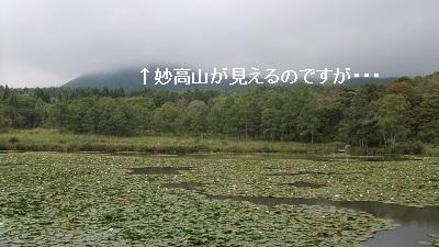 いもり池1