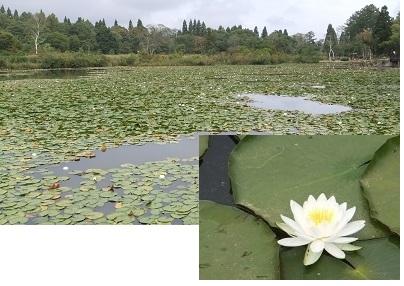 いもり池2