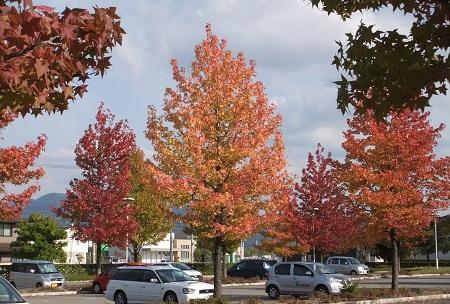 駐車場の紅葉