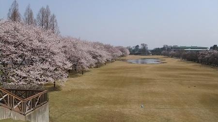 富山県中央植物園桜