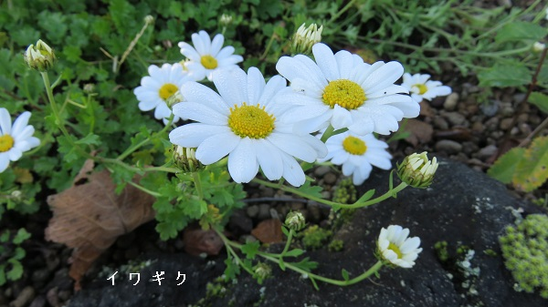 JIMG_0734.jpg