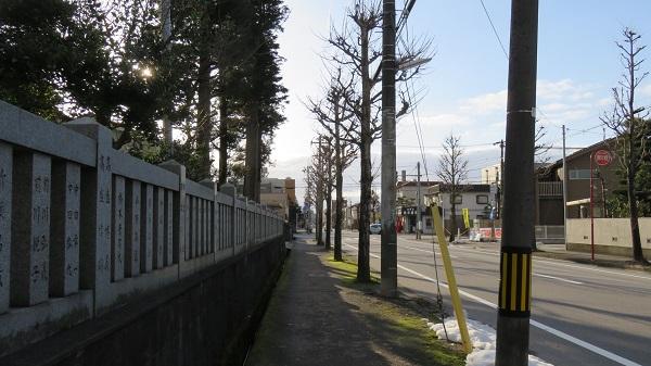 IMG_2503-600.jpg
