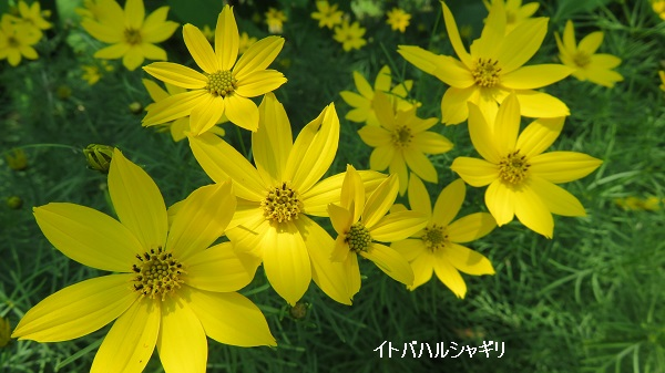 IMG_6954-600.jpg