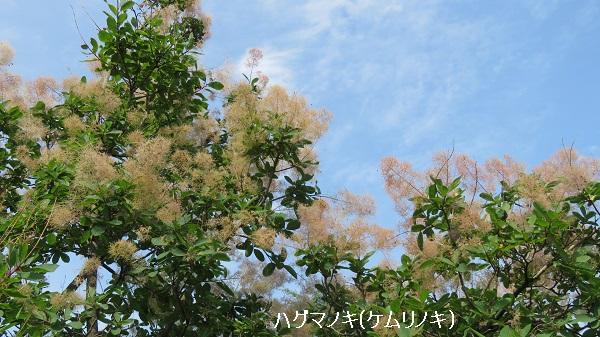 IMG_7292-2.jpg