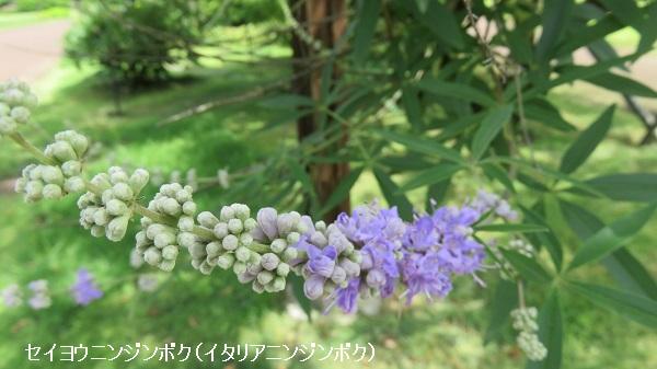 IMG_7465-600.jpg