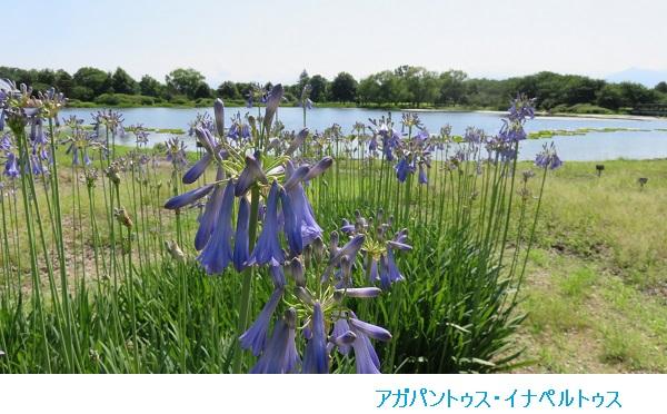 IMG_7923-600.jpg