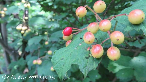 IMG_8125-600.jpg