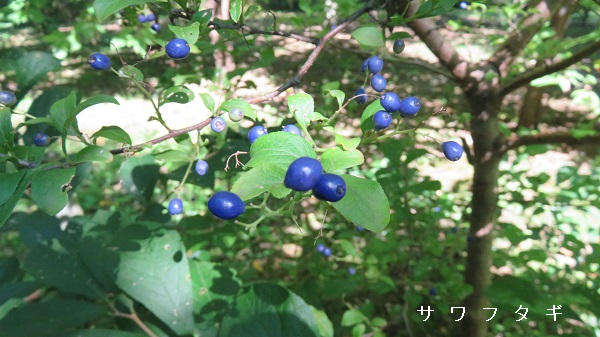 IMG_8984-600.jpg