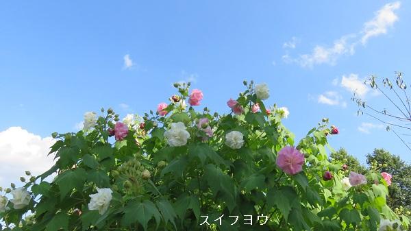 IMG_9661-600.jpg