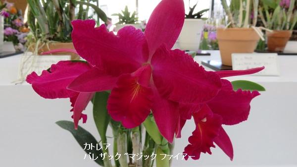 IMG_3758-600.jpg