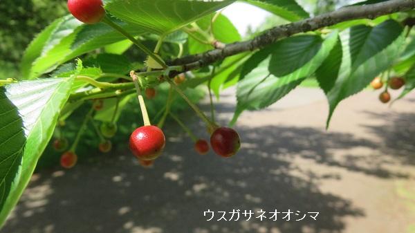 IMG_6868-600.jpg