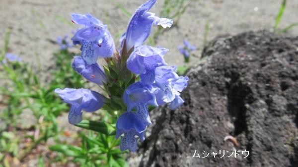 IMG_6879-600.jpg