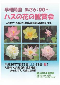ハスの花の鑑賞会.jpg