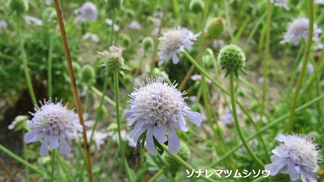 IMG_9385-650.jpg