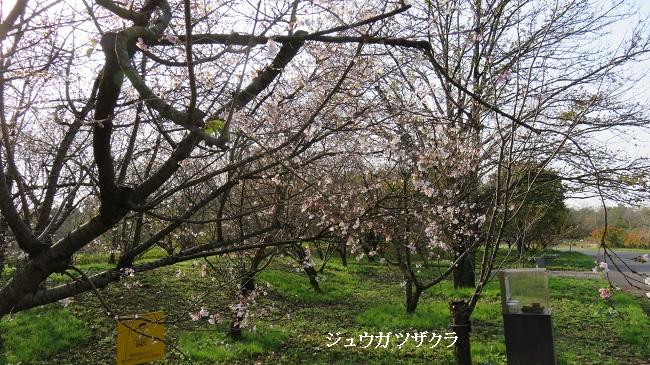 IMG_0736-650.jpg