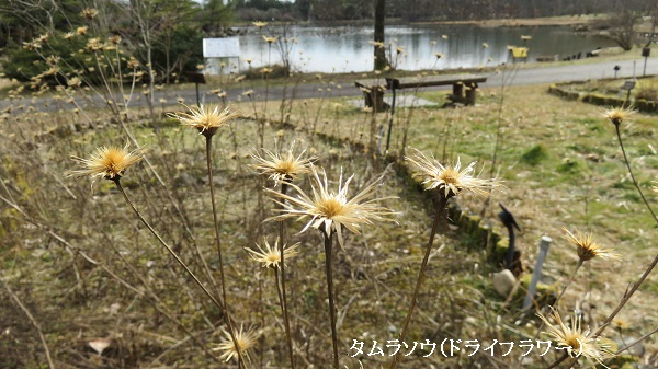 IMG_2270-600.jpg