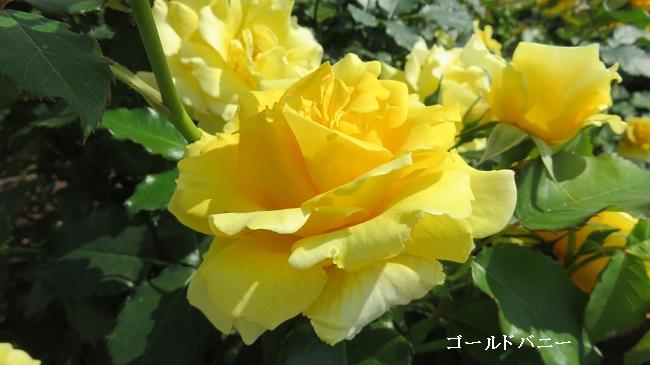 IMG_4773-650.jpg