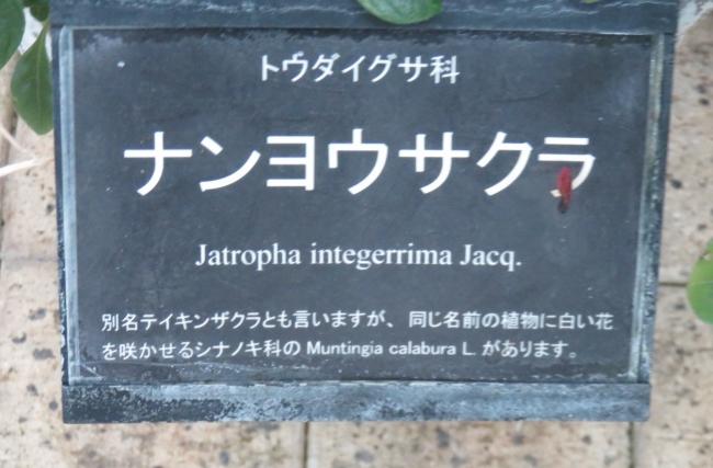 IMG_5789.JPG