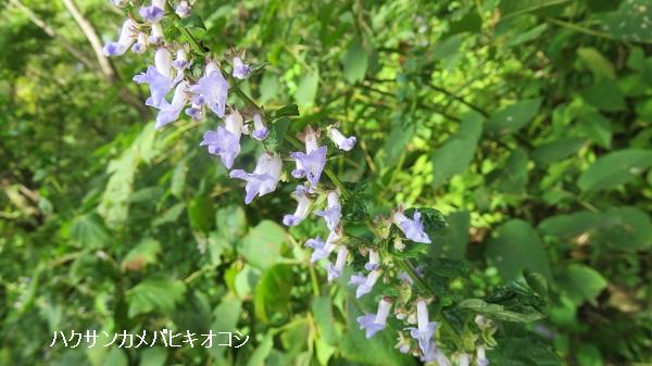IMG_7082-600.jpg