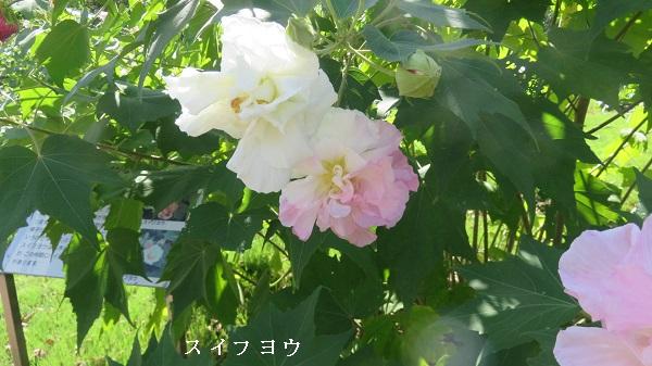 IMG_7316-600.jpg