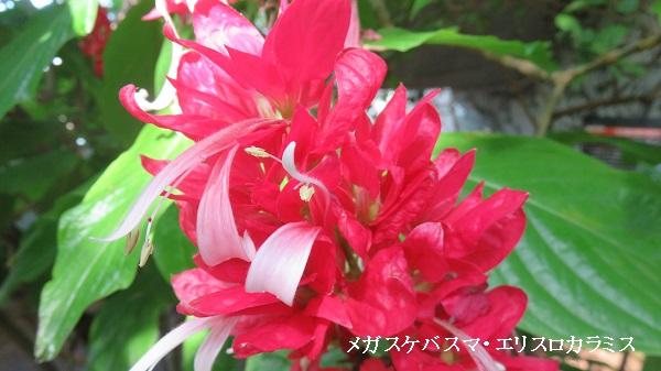 IMG_7689-600.jpg