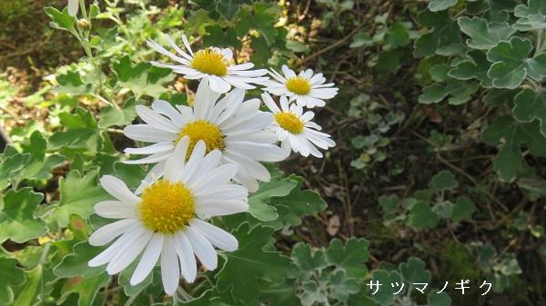IMG_7913-600.jpg