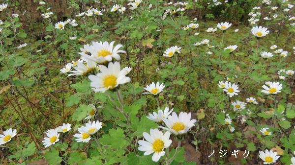 IMG_8633-600.jpg