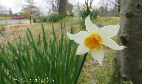 IMG_1557-2-500.jpg