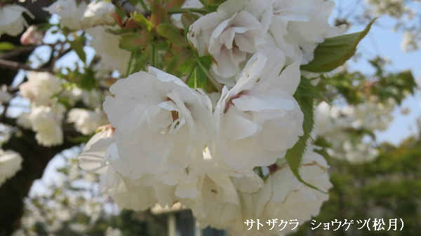 IMG_1688-600.jpg