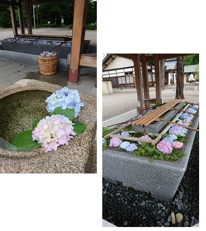 神社 アジサイ1と2.jpg